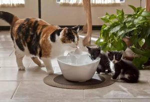 help cats drink more water